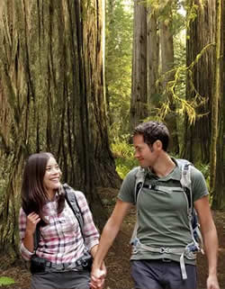 A couple loving their walk through the giant Redwoods